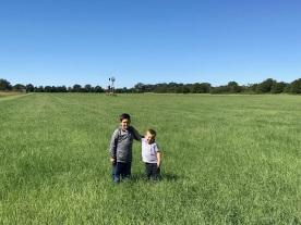 hay pasture boyus